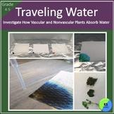 Vascular and Nonvascular Plants | Water Transportation | Grade 4 5 Science
