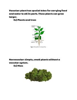Vascular vs. Nonvascular Plants