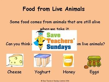 Vegans, Vegetarians and Omnivores Lesson plan and Worksheets (Venn diagram)