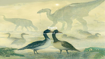 Vegavis An Extinct Bird From The Antarctic