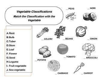 Vegetable Classifications handout/worksheet
