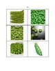 Vegetable Picture Cards