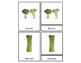 Vegetable Three Part Cards
