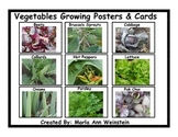 Vegetables Growing Posters & Cards