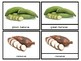 Vegetables of the Diaspora - Nomenclature Cards - African American