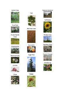 Vegetation Picture Game