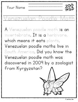 Venezuelan Poodle Moth -- 10 Resources -- Coloring Pages, Reading & Activities
