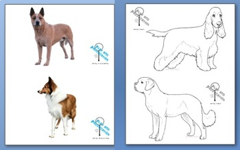 Venn Diagram: Cats vs. Dogs