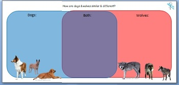 Venn Diagram: Compare and Contrast Dog vs. Wolf
