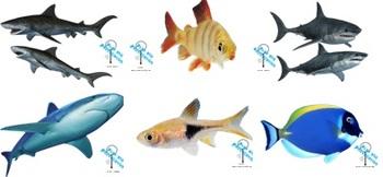 Venn Diagram: Compare and Contrast Fish vs. Shark