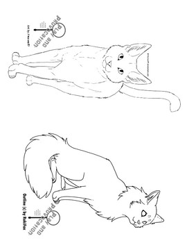 Venn Diagram: Domestic Cats vs. Wild Cats