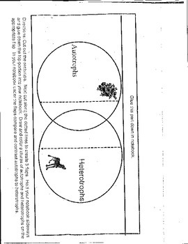 Venn Diagram Interactive Notebook Autotrophs and Heterotrophs
