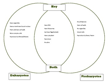 venn diagram key comparing prokaryotes and eukaryotes goes with cells part 1. Black Bedroom Furniture Sets. Home Design Ideas