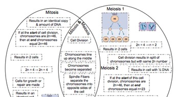 Free Probability Worksheets Venn Diagram Meiosis  Mitosis By Ruizscience  Teachers Pay Teachers Free Alphabet Worksheets For Pre-k Word with Preschool Alphabet Tracing Worksheets Venn Diagram Meiosis  Mitosis Population Pyramid Worksheets