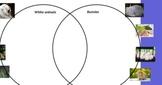 Venn Diagram Practice Flipchart