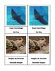 Venomous Animals Montessori 3-Part cards