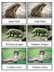 Venomous Creatures Montessori 3-part cards--Safari Venomous Toob