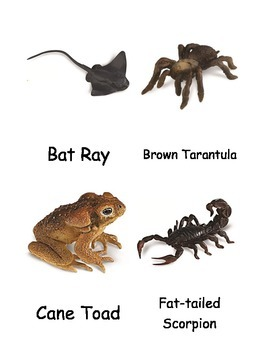 Venomous Creatures Nomenclature