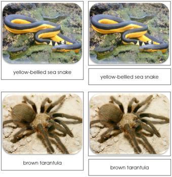 Venomous Creatures Safari Toob Cards - Montessori