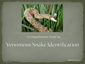 Venomous Snake Identification