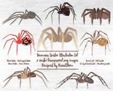 Venomous Spider Clipart - Arachnid Illustrations for Halloween or Science Class