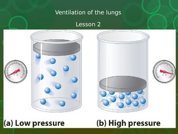 Ventilation of the lungs Lesson 2 (IGCSE Biology)