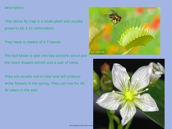 Venus Fly Trap - Power Point - Information Facts Pictures