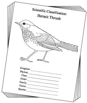 Vermont State Bird Notebooking Set (Hermit Thrush)