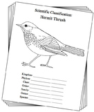 Vermont State Bird Notebooking Set (Hermit Thrush)