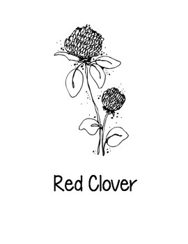 Vermont State Coloring Pages
