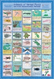 Vernal Pool Animals - Wetlands Poster