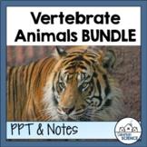 Vertebrate Animals Bundle