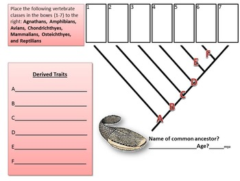 Evolution: Vertebrate Cladogram Formative Assessment