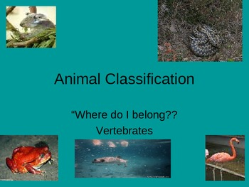Vertebrate Classification