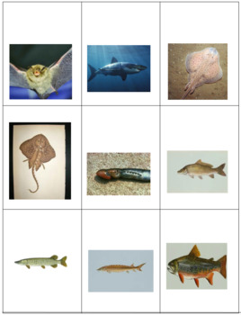 Vertebrate Classification Checkers with a DIFFERENCE