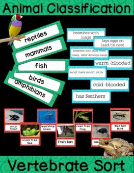 Animals - Vertebrate Classification Sort