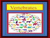 Vertebrate Classification and Characteristics
