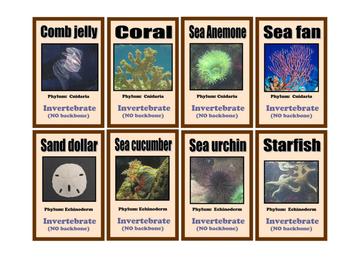 Who's Got the Bones?  - Vertebrate / Invertebrate Card Game (digital download)