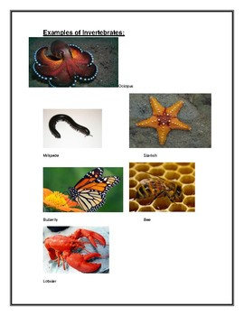 Vertebrate/Invertebrate Report