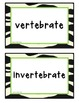 Vertebrate Invertebrate Sort