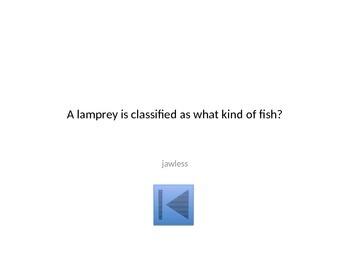 Vertebrate Jeopardy