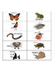 Vertebrate OR Invertebrate sort w/ realistic pictures- review, assess, center