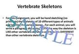 Vertebrate Skeletons