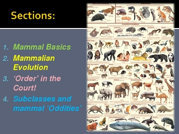 Vertebrate Zoology: An Introduction to the World of Mammals
