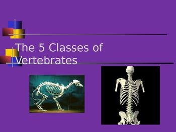 Animals-Vertebrate and Invertebrate