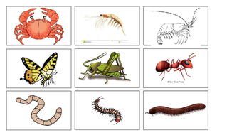 Vertebrate and Invertebrate Sort