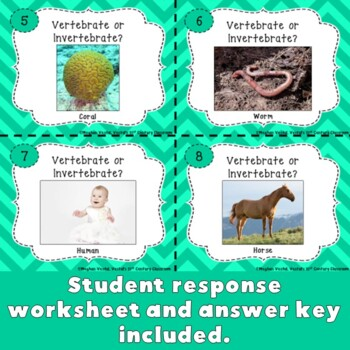 Vertebrate or Invertebrate?