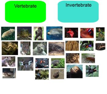 Vertebrate vs. Invertebrate SMART Board Game