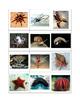 Vertebrate vs. Invertebrate sort