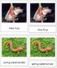 Vertebrates: Class Amphibia/Amphibians